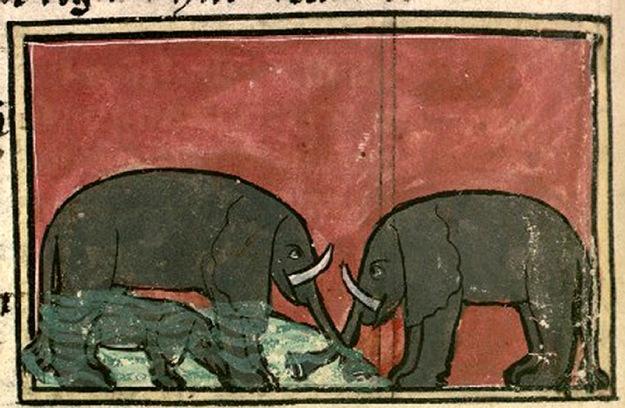elephant Bibliothèque Nationale de France, lat. 14429, Folio 114v